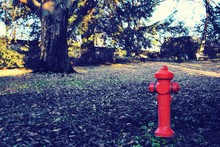 Red Fire Hydrant In Field