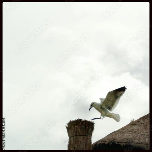 Fototapeta Bird Landing On Haystack