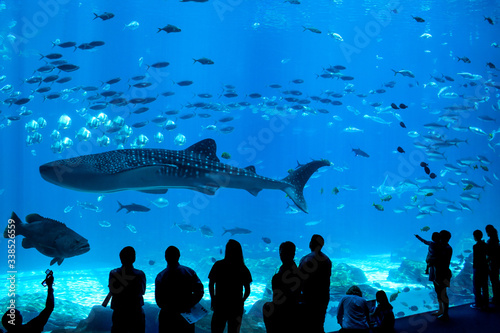 Fotografie, Obraz Aquarium