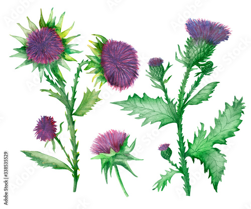 Vászonkép Watercolor hand painted nature weed plants set composition with milk thistle pur
