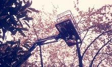 Low Angle View Of Cherry Picker By Tree Against Sky