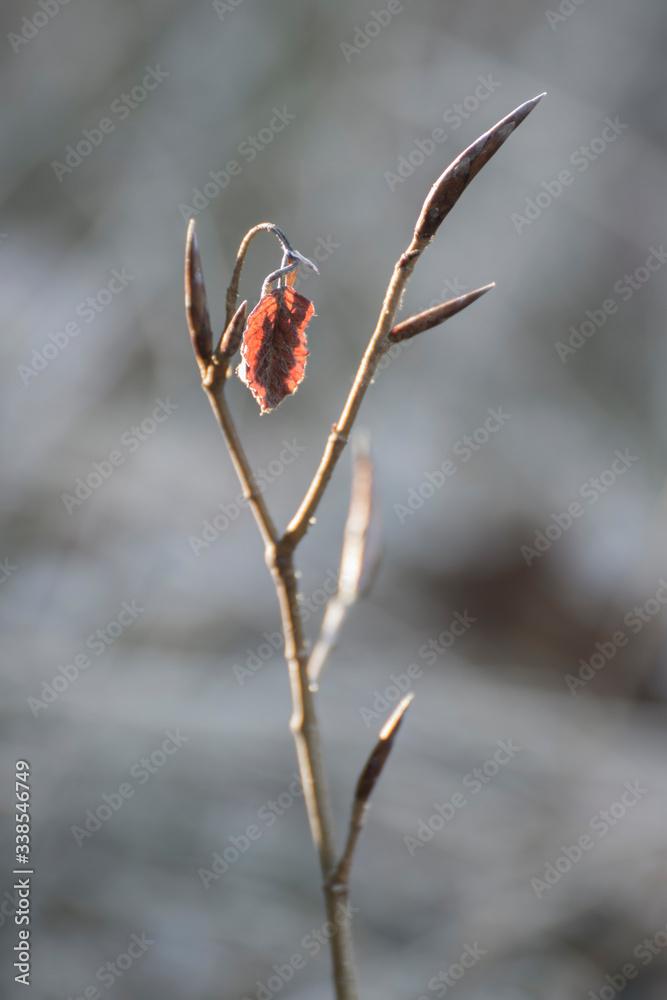 Fototapeta ostatni liść na drzewie