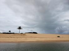 Coqueiros, Palmeiras, Deserto,...