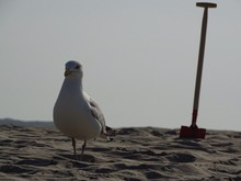 Seagull Standing On Beach