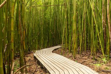 Šetnica kroz bambusovu šumu staze Pipiwai