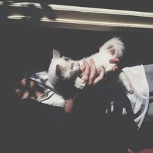 Man Holding Beautiful Little White Cat