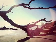 Dry Logs On A Sandy Beach