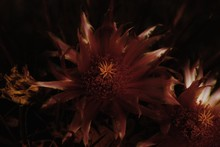 Vegetal Ornament With Dark Background