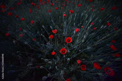 Fototapeta łąka 2 obraz