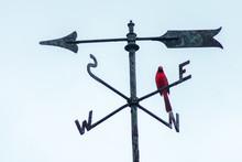 A Cardinal Perching On A Weathervane