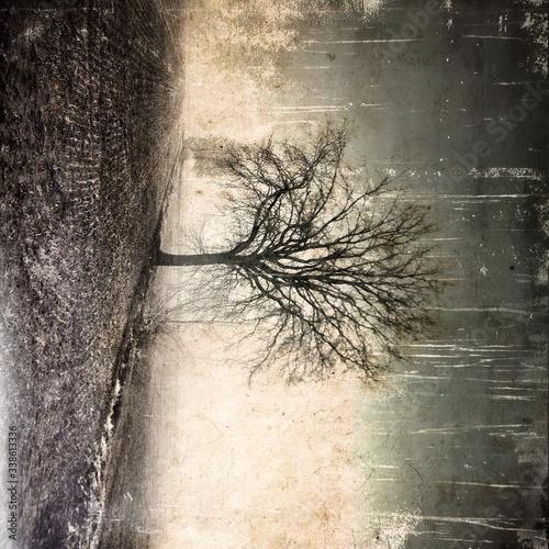 Obraz na plátně Bare Tree In Harrowed Field