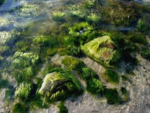 Moss Covered Rocks In Water
