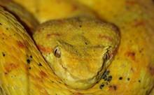 Full Frame Shot Of Eyelash Viper Snake