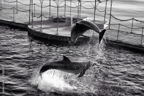 Two Bottlenose Dolphins Jumping From Water Fototapet
