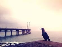 Raven Perching By Coastal Road