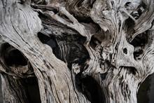 Closeup Of Driftwood