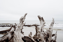 Driftwood On Beach On Cloudy Day