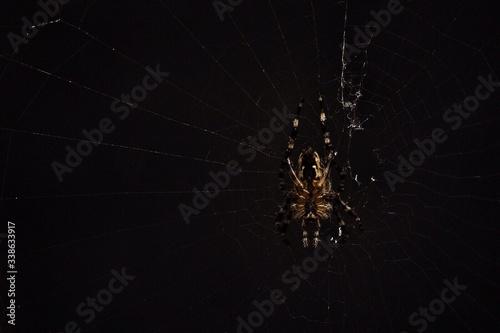 Foto Close-up Of Spider On Web Against Black Background