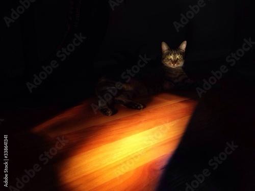 Fotografía Cat Lying On Floor
