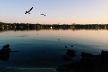 Seagulls Over Lake