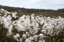 Close Up Of Tall Grass
