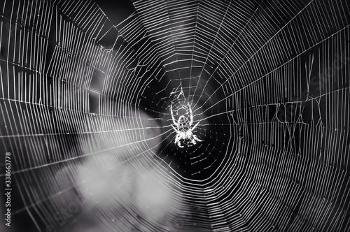 Fotografia Close-up Of Spider In Web