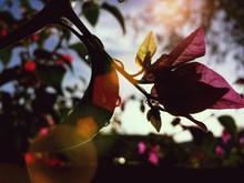 Branch In Sunlight