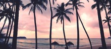 Palm Trees On Beach At Sunset