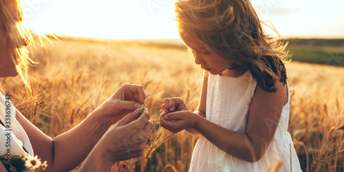 Fototapeta Caucasian mother and her girl holding some wheat seeds in a field during a sunset obraz