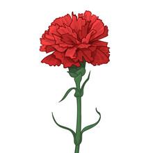 Red Carnation Flower. Happy Gr...