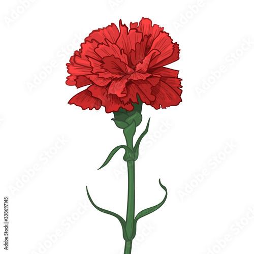 Red Carnation Flower Wallpaper Mural