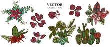 Flower Bouquet Of Colored Ficus, Iresine, Kalanchoe, Calathea, Guzmania, Cactus