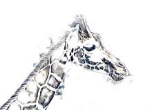 Drawing Art Drawing Illustration Of Giraffe