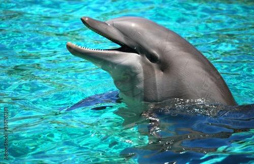 Foto Bottlenose Dolphin Swimming In Sea