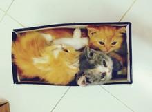 Cute Kittens Sitting Inside Shoe Box