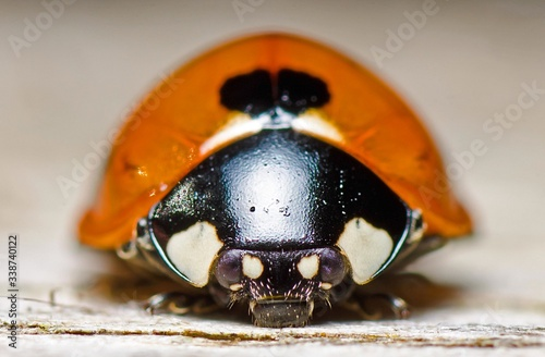 Close-up Of Lady Bug Canvas