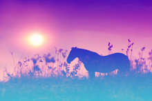 Silhouette Of A Horse On The Meadow At Sunset. Gradient Color.
