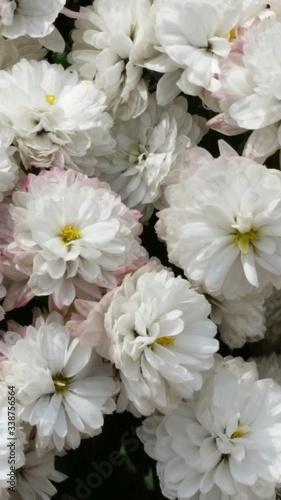Full Frame Of White Flowers #338756564