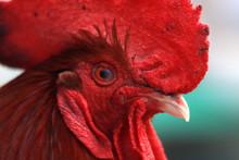 Close Up Bill ,beak ,eye And F...
