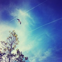 Low Angle View Of Seagull Flying Over Tree Against Sky