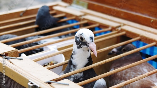Tablou Canvas Pigeons For Sale In Grote Market
