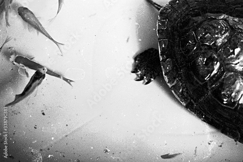 High Angle View Of Turtle And Fish Swimming Underwater