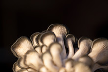 Mushrooms With Black Background