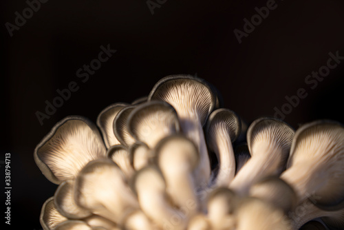 Photo mushrooms with black background
