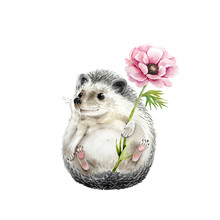 Cute Hedgehog With Anemone Flower Watercolor Illustration, Closeup On A White Background
