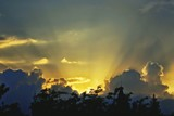 Fototapeta Na ścianę - Silhouette Trees Against Cloudy Sky During Sunset