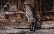 Cat Peeking In Wooden Hole
