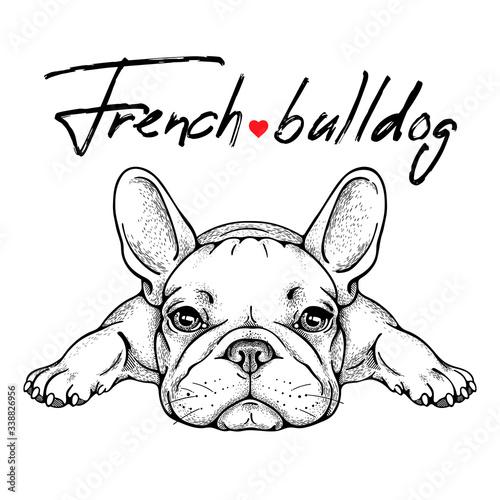 Fototapeta Cute french bulldog sketch. Vector illustration obraz