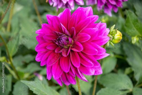 Blume in der Nahaufnahme