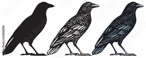 Photo Set of three hand-drawn black birds isolated on white background